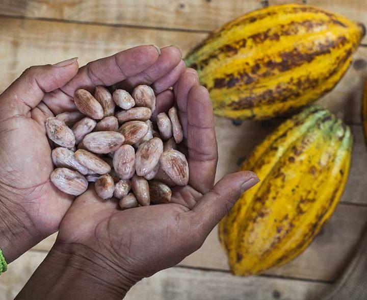 Cacao y alrededores