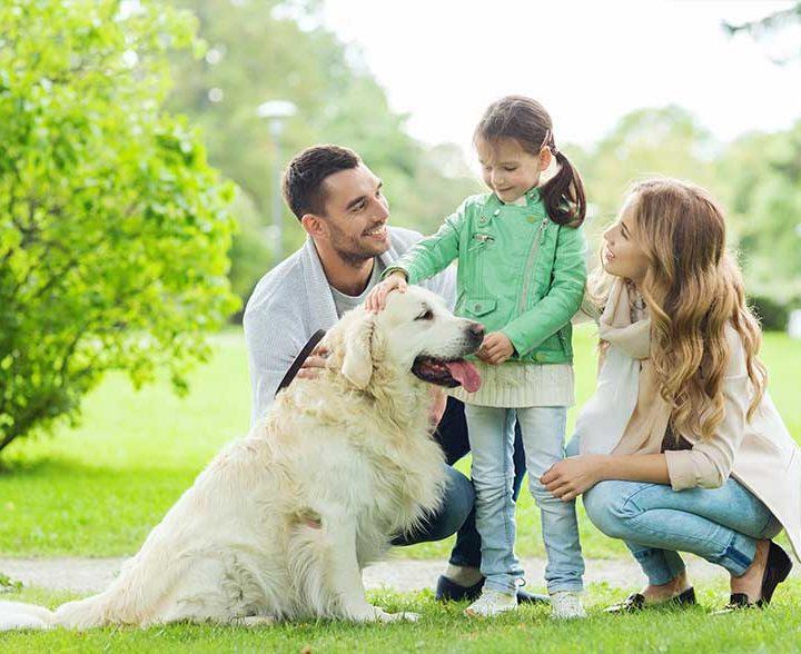Niños y animales, ¿qué precauciones tomar?